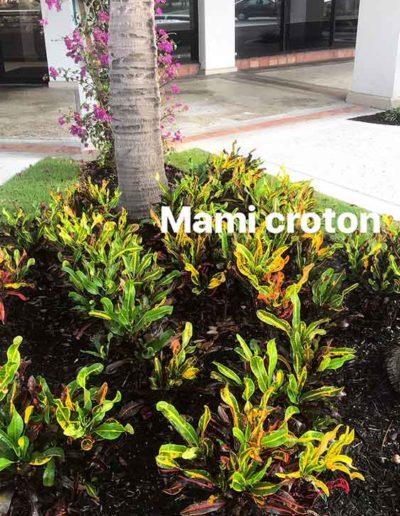 Mami Croton